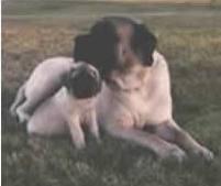 Mastiff and Puppy