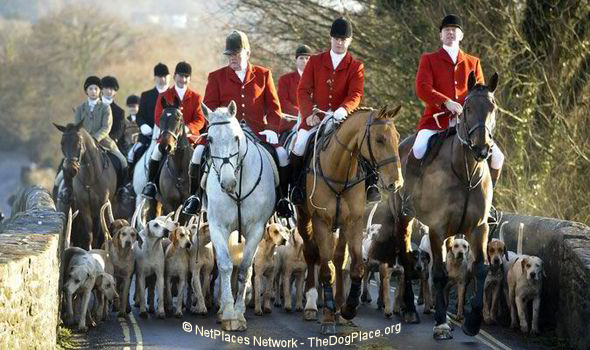 foxhunting-animal-rights-Pl-L19W1.jpg