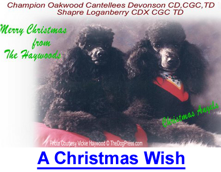 A CHRISTMAS WISH: I realized dogs can cross the rainbow bridge both ways.