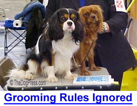 AKC GROOMING RULES IGNORED: AKC exhibitors faking color and using foreign substances.