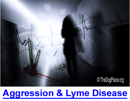 AGGRESSION & LYME: Nationally acclaimed report by Dr. Robert C. Bransfield, M.D.
