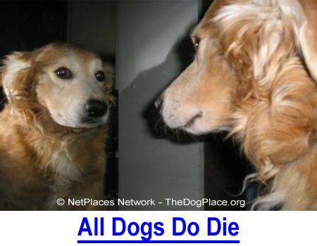 ALL DOGS DO DIE: It's life, irrespective of health testing as the new standard.