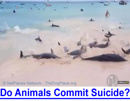 DO ANIMALS COMMIT SUICIDE? VIDEO clips will make you think... what would cause this?