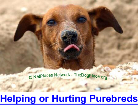 ARE WE HELPING OR HURTING PUREBRED DOGS? When trying to improve the dog, are we guilty of inadvertent cruelty?