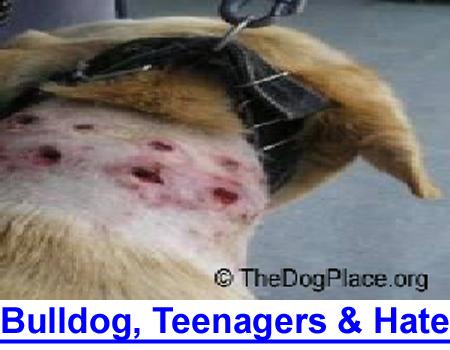A BULLDOG, TEENAGERS AND HATE: Dr. Lee reports horrific cruelty to a high school Bulldog mascot.