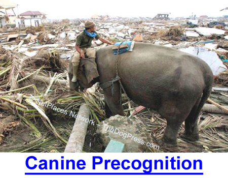 CANINE PRECOGNITION: Scientists say not but here are documented cases of ESP.