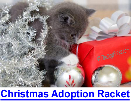 CHRISTMAS ADOPTION RACKET: Pet adoptions surge during Christmas as people open their hearts and homes but there's a dark side...