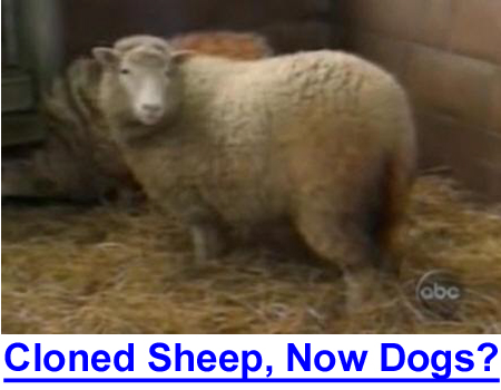 CLONING DOLLY THE SHEEP AND NOW YOUR DOG? A possible solution for dog breeders? See this VIDEO.