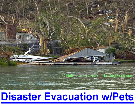 DISASTER EVACUATION WITH PETS: Updated survival info if you have pets or elderly family members.