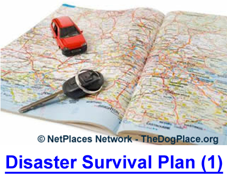 DISASTER SURVIAL PLAN (1): Dr. Roberta Lee, DD., PhD., ND. shows you how to live on the edge and outlast weather or social disasters.