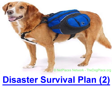 DISASTER SURVIAL PLAN (2): Dr. Roberta Lee, DD., PhD., ND. says you are prepared to survive and protect your family, including the dog that you are going to put to work!