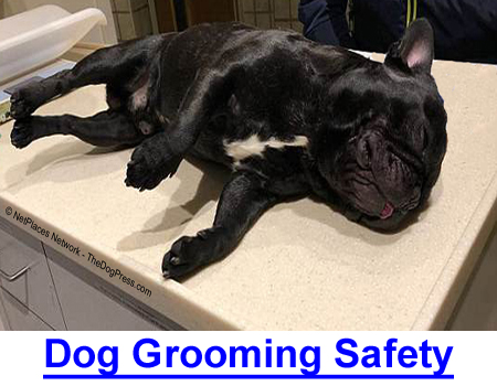 DOG GROOMING SAFETY: Millions of dogs go to grooming parlors but these 2020 dog deaths raised a flood of questions about groomer training and qualifications.