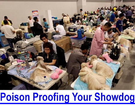 DOG POISONING & POISON PROOFING: COVID stress is killing dogs, the rational become irrational, protection and dog show precaution information.