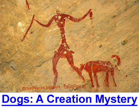 DOGS: THE CREATION-EVOLUTION MYSTERY - They didn't evolve, dogs came to us already domesticated...