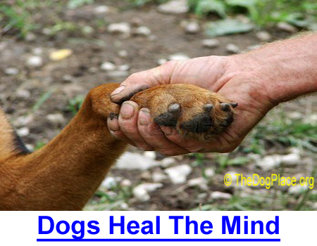 DOGS HEAL THE MIND: Therapy dogs can lower stress and their human's heart rate.
