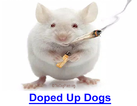 DOPED UP DOGS: Rat Park Veterinary Study, read this, then face your house dog... Is he on tranquilizers? Addicted because YOU became part of a national disgrace to pet owners and the veterinary profession?