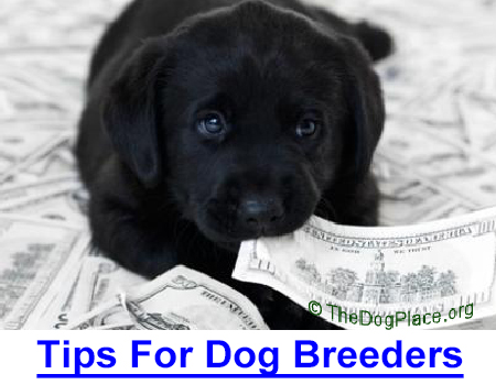 ECONOMY TIPS FOR DOG BREEDERS: All-breed judge and breeder shares insight on breeding a litter, rearing and marketing puppies, plus valuable advice on veterinary, vehicle, food and show expenses.