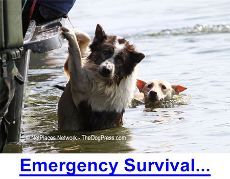 EMERGENCY SURVIVAL FOR ANIMAL OWNERS - Most animal owners would be unprepared for a breakdown in society such as is occurring in Venezuela, Hong Kong, and England.