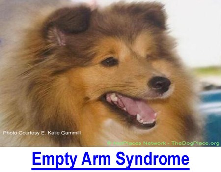 EMPTY ARM SYNDROME: There's no comfort when your pet dies but this judge's advice can help.