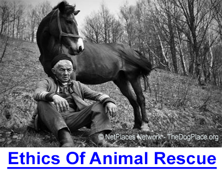ETHICS OF ANIMAL RESCUE: I met a 30-year-old horse named Arthur owned by an 88-year-old widower who was diagnosed with dementia and committed to a nursing home, and then...
