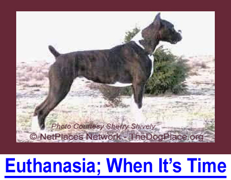 EUTHANASIA; WHEN IT IS TIME: How you will know when kindness is letting your best friend go.