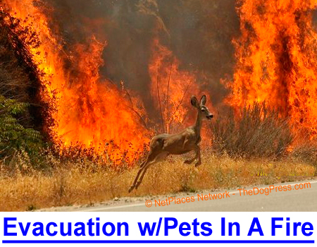 EVACUATING WITH PETS IN A FIRE: Owner escapes Los Alamos fires that killed countless animals.