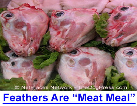 """FEATHERS ARE """"MEAT MEAL"""" Two major dog food company suppliers fined $7 million for misbranded ingredients but they are offshore so can you trust these premium dog food brands?"""