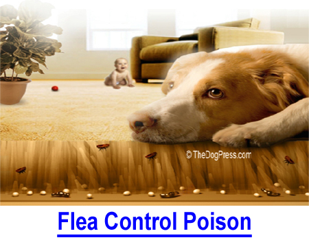 FLEA CONTROL POISON: How to get rid of fleas? Over 60 million pet owning households are contaminated with insecticides and pesticides; SOLUTIONS to minimize human and pet health risk.