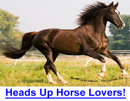 HEADS UP HORSE LOVERS! Puppy mill horrors declined when the NetPlaces Network exposed the too-common animal cruelty, but horse and livestock transport has been under the radar… until now.