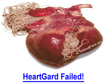 HEARTGARD FAILED! People need to know how this can happen!  How many owners blamed themselves when their dogs got a heartworm-positive reading and was on preventative, thought maybe they missed a dose and did NOT file a claim?