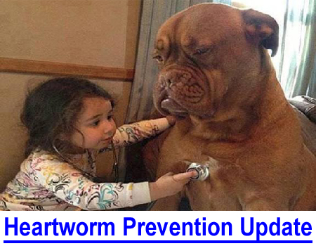 """HEARTWORM PREVENTION UPDATE: Heartworm season is in full swing and veterinarians urge dog owners to """"protect your pet"""" but many fail to explain the risks of heartworm prevention medication."""