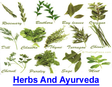 HERBS AND AYURVEDA MEDICINE: Plant extracts to cure, control or prevent disease.