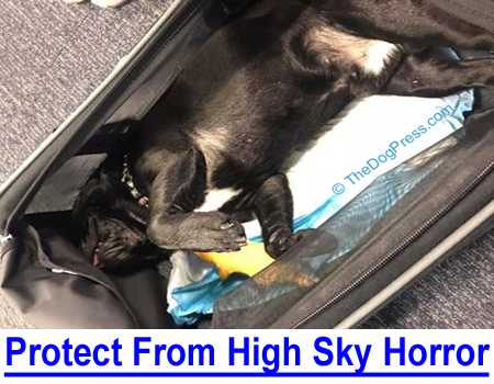 HIGH SKY HORROR: Protect Your Pet, Prepare for the flight? What is the risk? Pet death statistics?