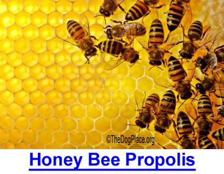 BEE PROPOLIS: Can kill bacteria, viruses, shrink tumors, and prevent anesthesia-related memory loss.