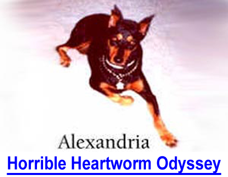 HORRIBLE HEARTWORM ODYSSEY: Doctor's detailed case notes of veterinary application of the heartworm preventative Revolution and the devastating health effects to this Doberman.