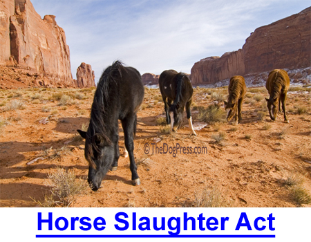 HORSE SLAUGHTER ACT: How banning horse slaughter affects you as a dog owner!