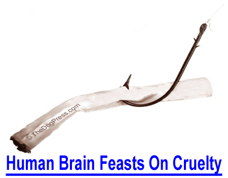 HUMAN BRAIN FEASTS ON ANIMAL CRUELTY: Is mankind really the superior species? Does top of the food chain mean humans are at the top of the animal kingdom in spite of unspeakable cruelties?