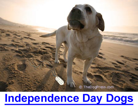 INDEPENDENCE DAY DOGS: What do dogs have to do with the to be American?