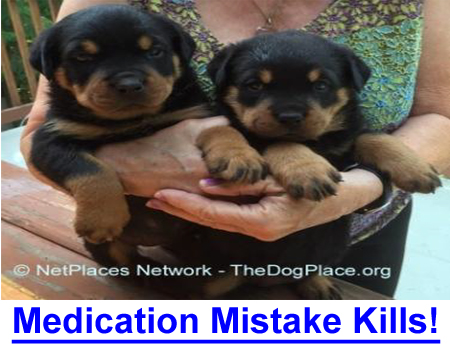 MEDICAL MISTAKE KILLS ROTTWEILER! Surgical or medication errors in veterinary medicine are rarely reported.