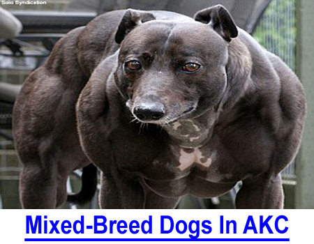 MIXED-BREED DOGS: THE AKC RESPONSIBILITY? Do you support AKC's charter and duty to purebred dogs or should breeders fund promotion of mixed breed dogs?