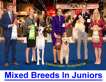 MIXED BREED DOGS IN JUNIOR SHOWMANSHIP: AKC rules state; Juniors are judged by official AKC Judge in the quality of their presentation, not the dog.