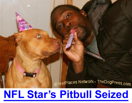NFL STAR'S PITBULL SEIZED: Pitbull Party! Eilis celebrates her birthday with owner Bryce Brown