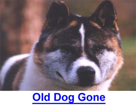OLD DOG GONE: Be prepared for him to go for dogs are different, that you know.
