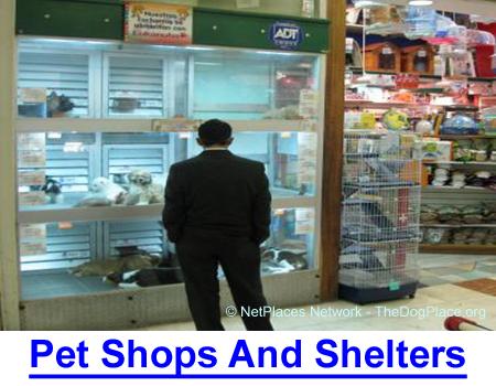 PET SHOP & shelter PUREBREDS: USDA breeder quits when shelters ruined the purebred market.