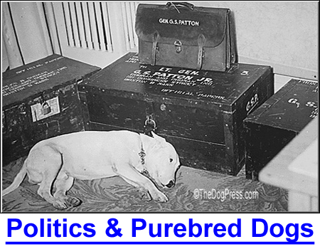 POLITICS AND PUREBRED DOGS: History shows what Presidents prefer so choose wisely. Willie, General Patton's Bull Terrier