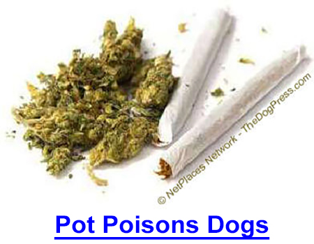 POT POISONS DOGS: AVMA cites dog deaths from baked goods containing THC concentrated in butter, lists symptoms of marijuana toxicity.