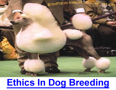 ETHICS IN DOG BREEDING: Poodle breeder looks at lies, dyes, and size, and then there's snip and clip, using wigs and otherwise affecting genetics in Toys, Miniatures and Standards.
