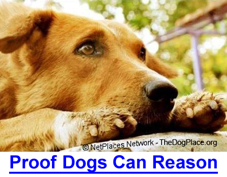 PROOF DOGS CAN REASON: Your dog really can reason and solve problems.
