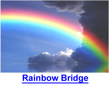 RAINBOW BRIDGE: Without our dogs, no afterlife could possibly be complete.