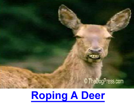 ROPING A DEER: When you quit laughing, you'll swear off deer hunting forever...